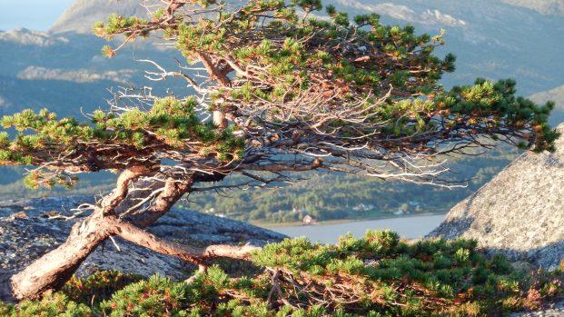 Voyage rando kayak en Norvege – Arctica Nature100