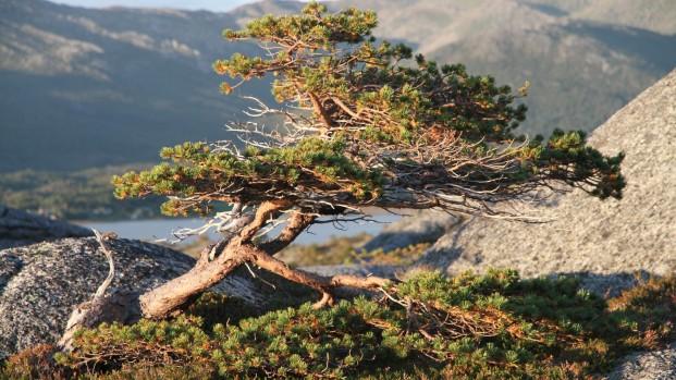 Voyage-rando-kayak-en-Norvege-Arctica-Nature17-621×349