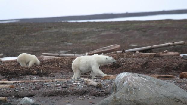 Pierre-Fijalkowski-Arctica-Nature-Spitzberg-201402-621×349